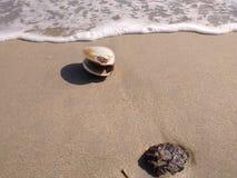 Muschelsandwelle und -felsen auf Strand Lizenzfreies Stockbild