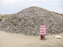 Muschelschaledump in Nantucket lizenzfreies stockbild