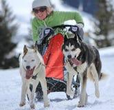 Cani di slitta internazionali della corsa, muschi, Svizzera Immagini Stock Libere da Diritti