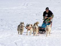 Cani di slitta internazionali della corsa, muschi, Svizzera Fotografia Stock
