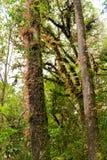 Muschio, albero della felce in Ang Ka Luang Nature Trail immagini stock