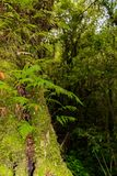 Muschio, albero della felce in Ang Ka Luang Nature Trail fotografie stock
