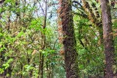 Muschio, albero della felce in Ang Ka Luang Nature Trail immagini stock libere da diritti