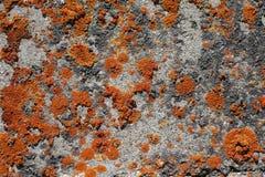 Muschio arancio su roccia Fotografie Stock