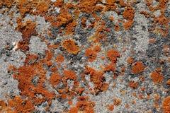 Muschio arancio su roccia 2 Fotografia Stock Libera da Diritti