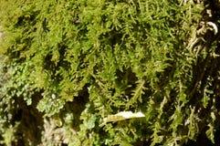 Muschio bagnato immagine stock