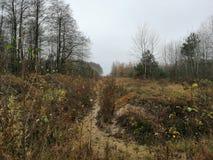 muschio Bielorussia cespuglio del paesaggio di autunno della foresta della natura fotografia stock