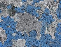 Muschio blu Immagini Stock Libere da Diritti