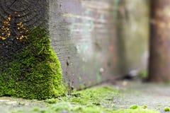 Muschio che cresce sul vecchio legno Fotografia Stock Libera da Diritti