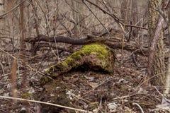 Muschio del mulino del grano da macinare dell'insenatura del pino Immagine Stock