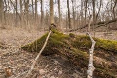 Muschio 3 del mulino del grano da macinare dell'insenatura del pino Immagini Stock
