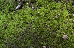 Muschio del suolo di Greeen fotografie stock libere da diritti