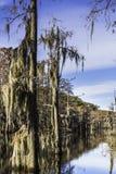 Muschio dell'albero della palude Immagini Stock Libere da Diritti