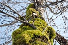 Muschio dell'albero di Portage Alaska immagine stock libera da diritti