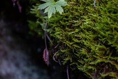 Muschio della caverna dell'islandese Fotografie Stock