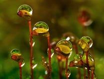 Muschio della foresta Fotografia Stock