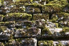 Muschio della parete di meraviglia sulla vecchia pietra Fotografie Stock