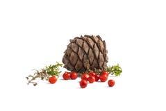 Muschio della pigna e sorba rossa Immagini Stock