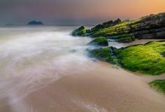 Muschio di mare verde sulla pietra Immagini Stock Libere da Diritti