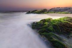 Muschio di mare verde sulla pietra Fotografie Stock Libere da Diritti