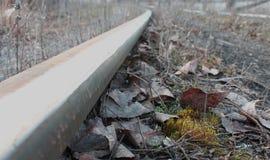 Muschio e ferrovia Fotografia Stock Libera da Diritti