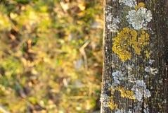 Muschio e lichene Fotografia Stock