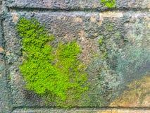 Muschio e lichene Immagine Stock