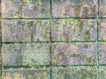 Muschio e lichene del primo piano Fotografia Stock Libera da Diritti