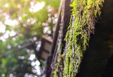 Muschio e lichene in foresta, foresta pluviale muscosa, fuoco molle Fotografie Stock