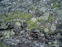 Muschio e lichene sulla roccia Immagini Stock Libere da Diritti