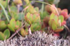 Muschio e licheni Immagine Stock Libera da Diritti