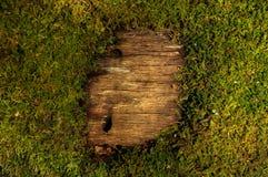 Muschio e modello di legno fotografia stock libera da diritti