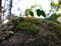 Muschio e pianta della felce fotografia stock libera da diritti