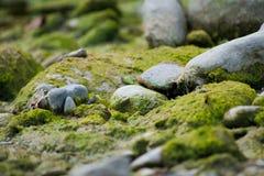 Muschio e pietre vicino ad un fiume in Italia con le foglie ed il ramo fotografia stock libera da diritti