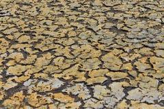 Muschio e terra asciutta Immagine Stock