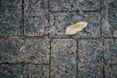 Muschio e una foglia sul mattone della laterite Immagine Stock