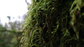 Muschio e vegetazione dell'albero Fotografie Stock Libere da Diritti