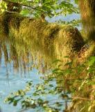 Muschio in foresta pluviale Fotografia Stock Libera da Diritti