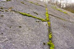 Muschio fra le lastre di cemento armato Fotografia Stock