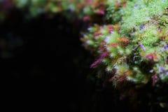 Muschio fresco fotografie stock libere da diritti