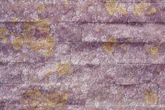 Muschio invecchiato sulla struttura della parete Immagini Stock Libere da Diritti
