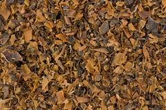 Muschio irlandese (chondrus crispus) Fotografie Stock