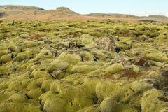 Muschio islandese Fotografia Stock Libera da Diritti