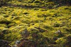 Muschio islandese e rocce vulcaniche/Islanda Fotografie Stock