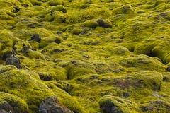 Muschio islandese e rocce vulcaniche/Islanda Immagini Stock Libere da Diritti