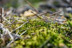 Muschio nella foresta Fotografie Stock Libere da Diritti