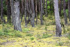 Muschio nella foresta Immagini Stock Libere da Diritti