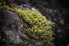 Muschio-sopra una roccia Stockfotografie