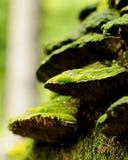 Muschio su legno guasto Fotografie Stock Libere da Diritti