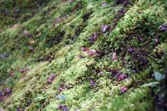 Muschio su terra al giardino di Yoshikien, Nara Immagine Stock Libera da Diritti